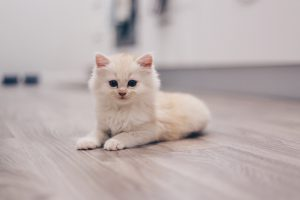 Pets Allergy